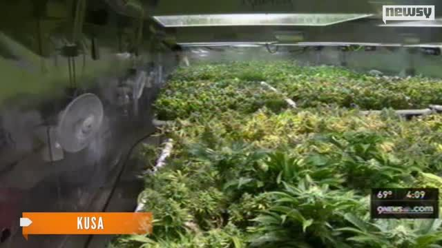 News video: Colorado Takes In $2 Million From January Marijuana Sales